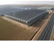 【歌珊温室】焦作市博爱县连栋全玻璃温室大棚工程案例